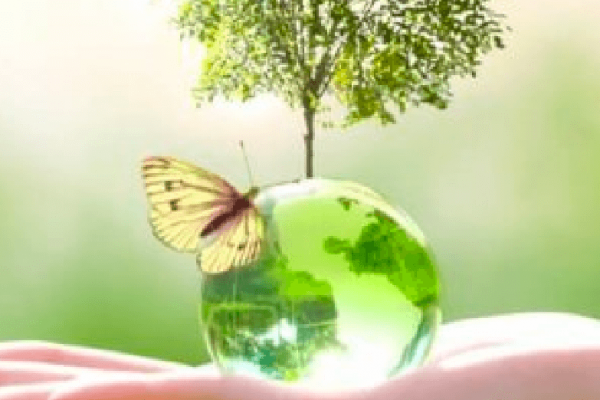 Sustainable sourcing: how a green supply chain became the new corporate necessity